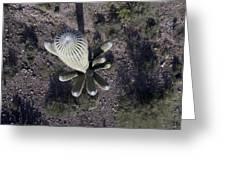 Sagugaro Cactus Greeting Card