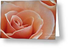 Sahara Light Tan Cream Rose Greeting Card