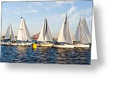 Sail Race Greeting Card