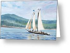 Sailing Into Castine Harbor Greeting Card