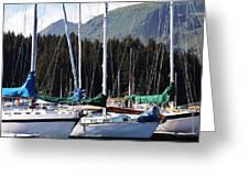 Sails Of Seldovia Greeting Card