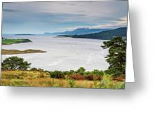 Sails On The Kyles Of Bute Greeting Card