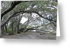 Saint Andrews Park Florida Greeting Card
