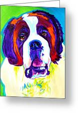 Saint Bernard -  Greeting Card
