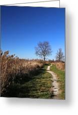 Saint Johns Marsh In Fall 3 Greeting Card