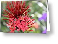 Saint Lucia Flower IIi Greeting Card