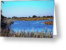 Saint Marks National Wildlife Refuge Lagoon Greeting Card
