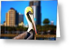 Saint Petersburg Pelican Greeting Card