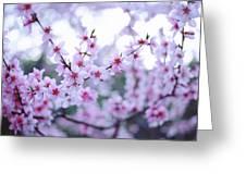 Sakura Blossom Greeting Card