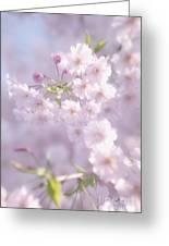 Sakura Trees Greeting Card