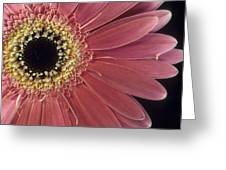 Salmon Gerber Daisy Greeting Card