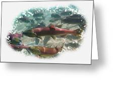 Salmon Migration Greeting Card
