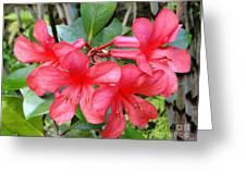 Salmon Pink In The Tropics Greeting Card