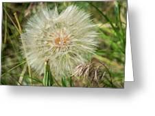 Salsify Seed Head Greeting Card