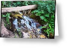 Mill Creek Canyon - Utah Greeting Card
