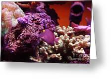 Salt Water  Aquarium Greeting Card