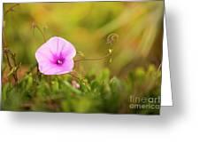 Saltmarsh Morning Glory Flower  Greeting Card