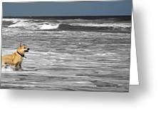Salty Dog Greeting Card
