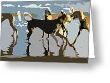 Salukis On The Beach Greeting Card