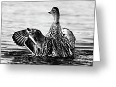 Salute - Black And White Greeting Card
