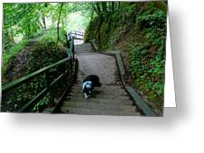 Salvesen Steps North Greeting Card