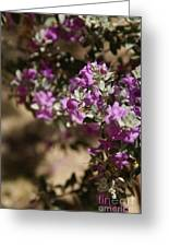 Salvia Dorrii Greeting Card