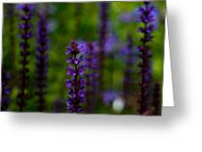 Salvia Greeting Card