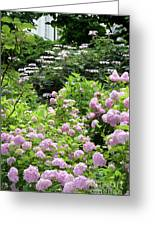 Pink Hydrangeas In Mirabell Garden Greeting Card