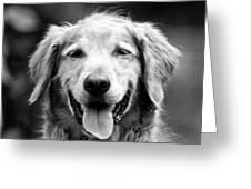 Sam Smiling Greeting Card