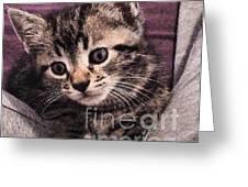 Sam  The Kitten Greeting Card