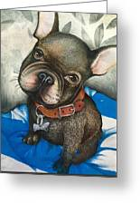 Sammy The French Bulldog Greeting Card