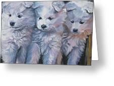 Samoyed Pups Greeting Card