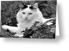Sampson In Black And White Greeting Card