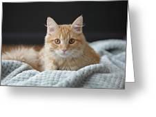 Samson_speaks Kitten Years Greeting Card