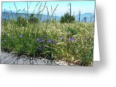 San Bernardino Mountains - Southern California 5 Greeting Card
