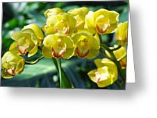 San Diego Yellow Orchids Greeting Card