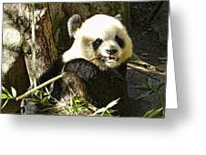 San Diego Panda Greeting Card