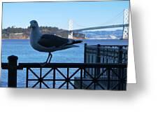 San Francisco - Oakland Bay Bridge - Seagull View Greeting Card