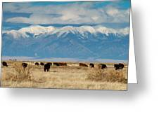 San Luis Valley And Cattle Greeting Card