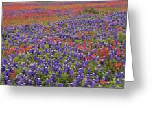 Sand Bluebonnet And Paintbrush Greeting Card