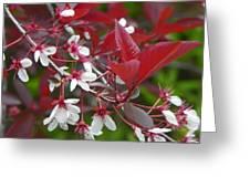 Sand Cherry Photo Greeting Card