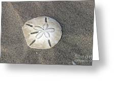 Sand Dollar 1 Greeting Card