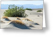 Sand Dunes, Plants, Mountains Greeting Card