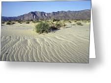 Sand Dunes & San Ysidro Mountains At El Greeting Card