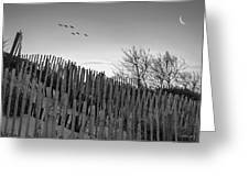 Dune Fences - Grayscale Greeting Card