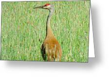 Sand Hill Crane Greeting Card