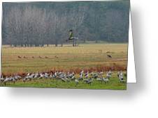 Sand Hill Crane Migration Greeting Card