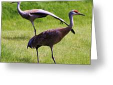 Sand Hill Crane Of 2 Greeting Card