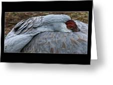 Sand Hill Crane. Greeting Card
