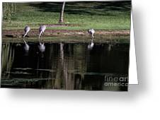 Sand Hill Cranes Dining Room Greeting Card